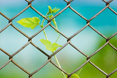 Cape Coral Gates and Fences - Chain Link Fencing and Gates 1